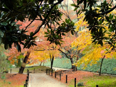 japanese park autumn